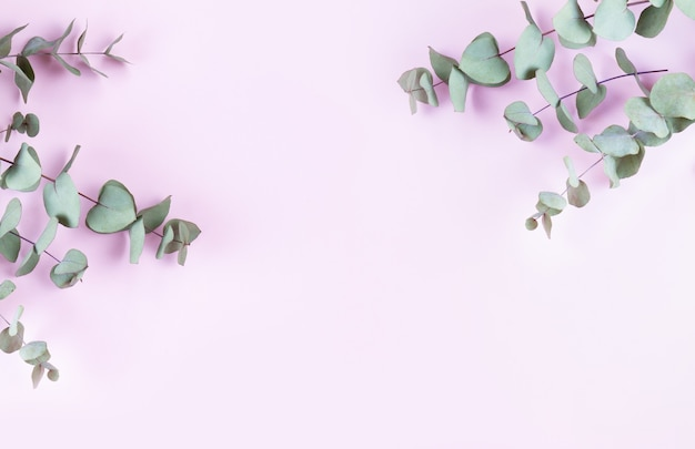 Green eucalyptus leaves isolated on pink
