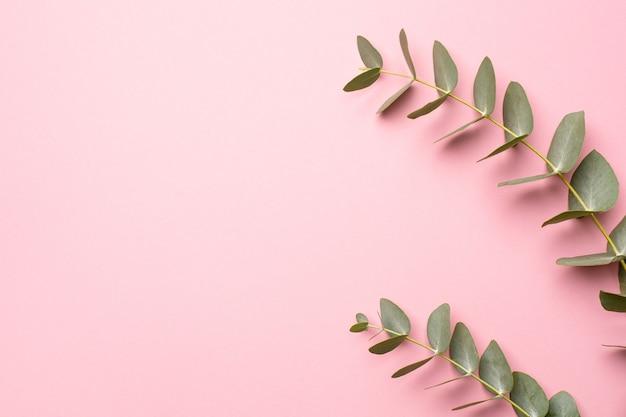 분홍색 배경에 녹색 유칼립투스 식물
