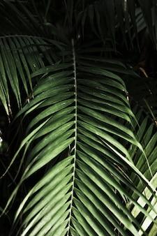Le foglie esotiche verdi si chiudono su