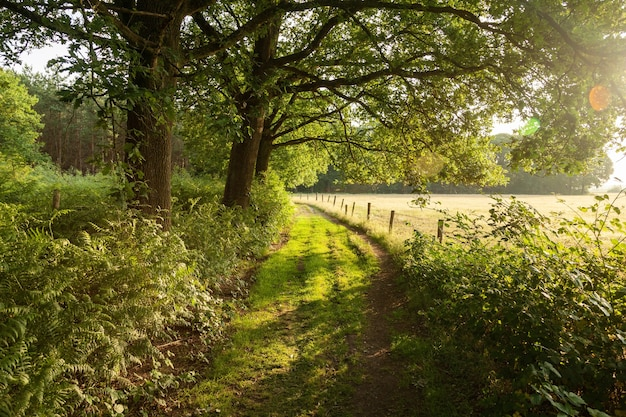 Strada agricola verde nei paesi bassi durante l'alba