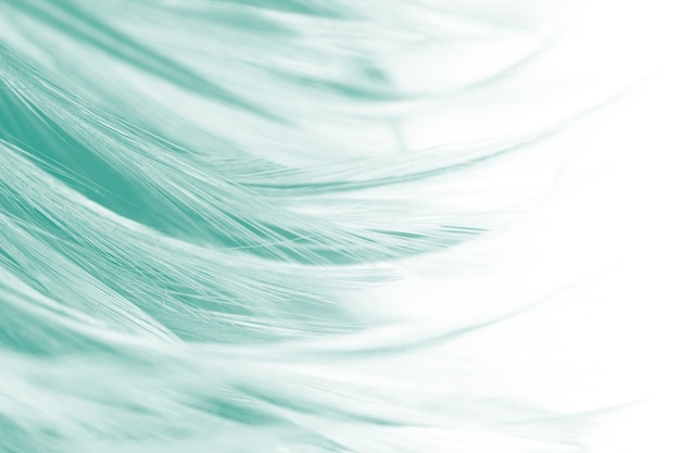 Green feather background