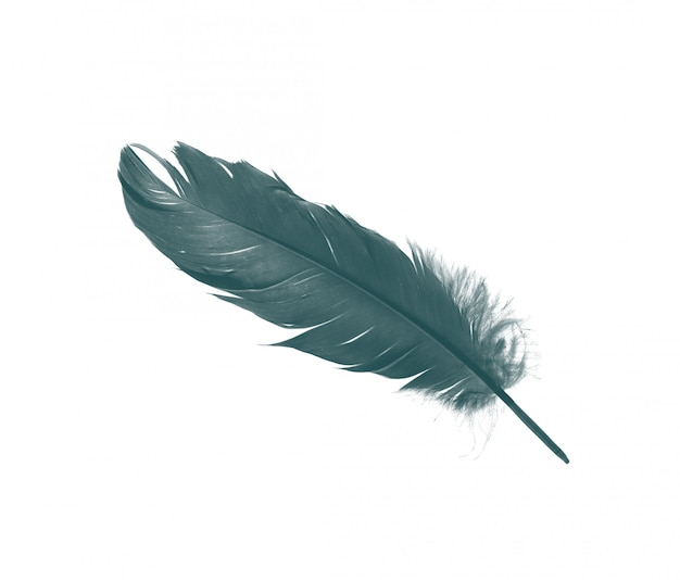 Green feather isolated on white background