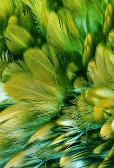 Green feather pattern texture background