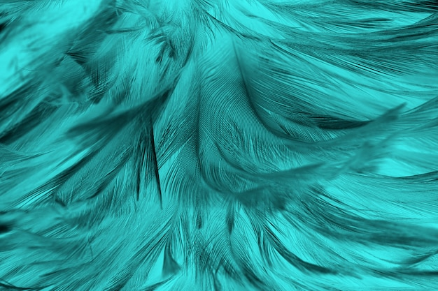 Green feather texture background