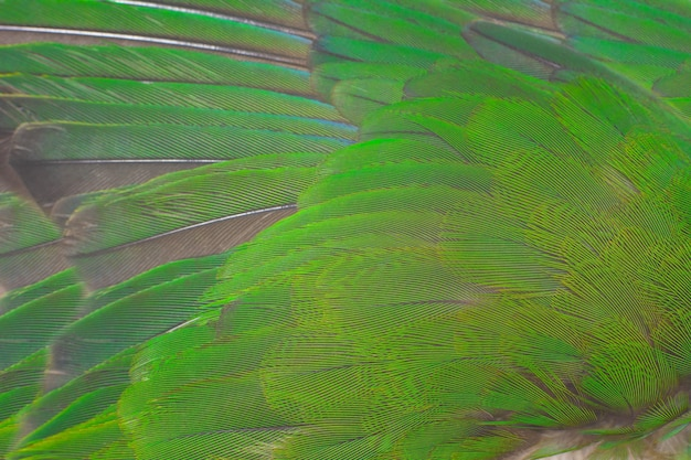 緑の羽のテクスチャ背景