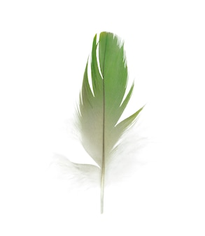 Green feather on white background