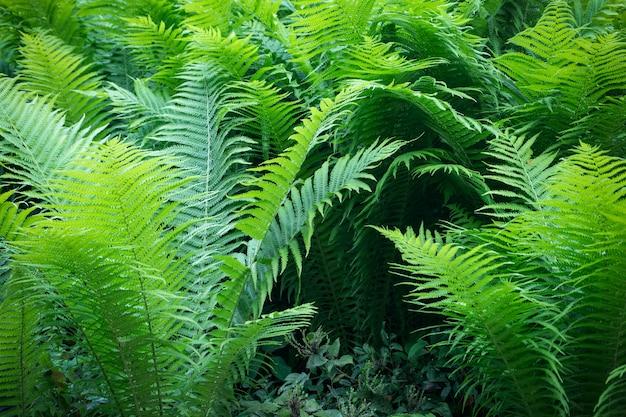 Green fern background, fresh green leaves texture