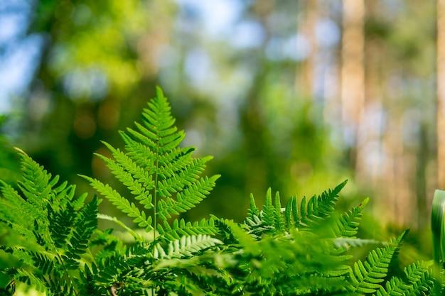 緑のシダのぱりっとした草のクローズアップ高品質の写真