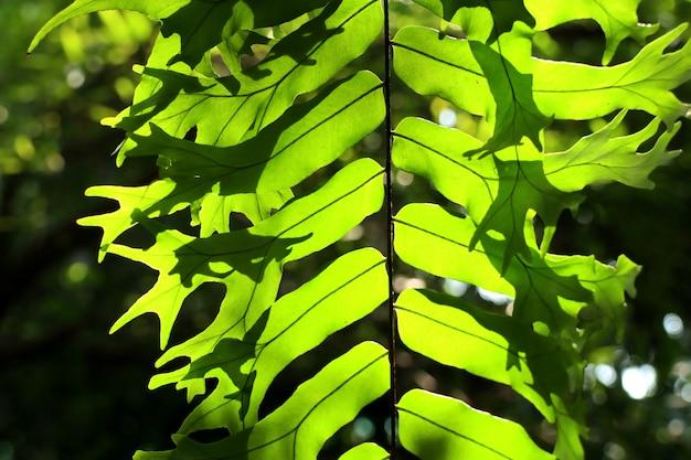 Green fern for decorating garden