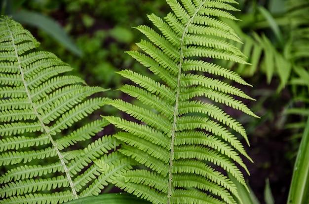 Зеленый папоротник в лесу