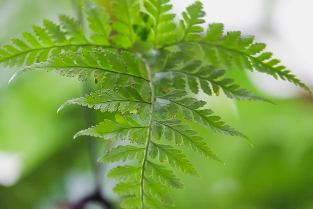 Фон листьев зеленого папоротника Premium Фотографии