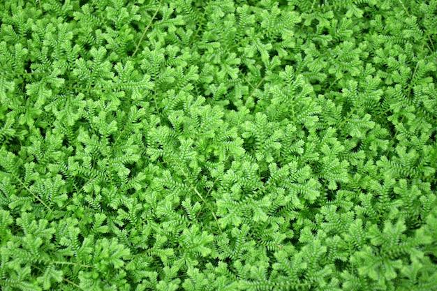 Фон из листьев зеленого папоротника