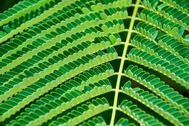 Green fern leaf close up as natural background