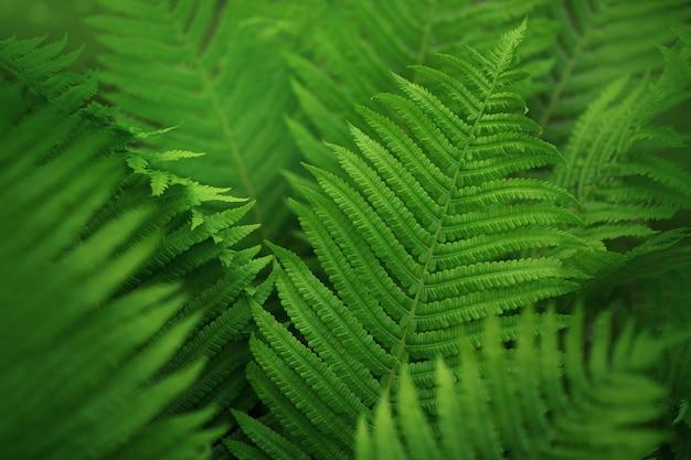 Лист зеленого папоротника