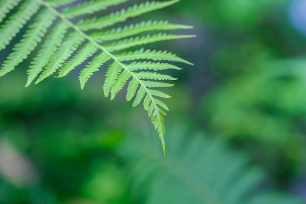 Green fern leaves background