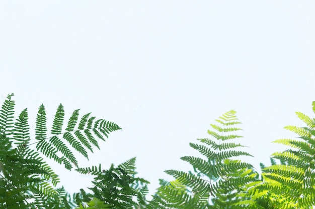 Green fern leaves on a blue light background