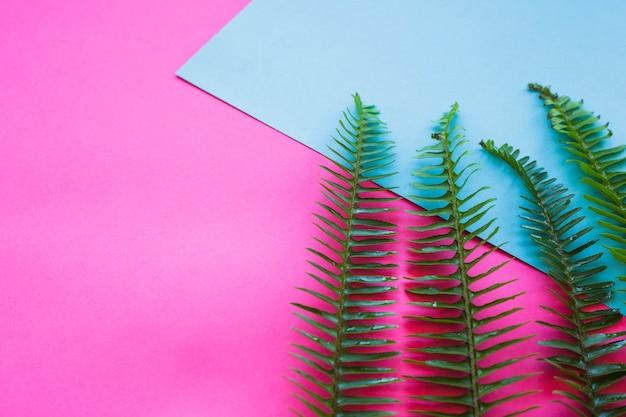 Green fern leaves on blue
