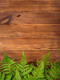 Green fern leaves on brown oak wood background with copy space