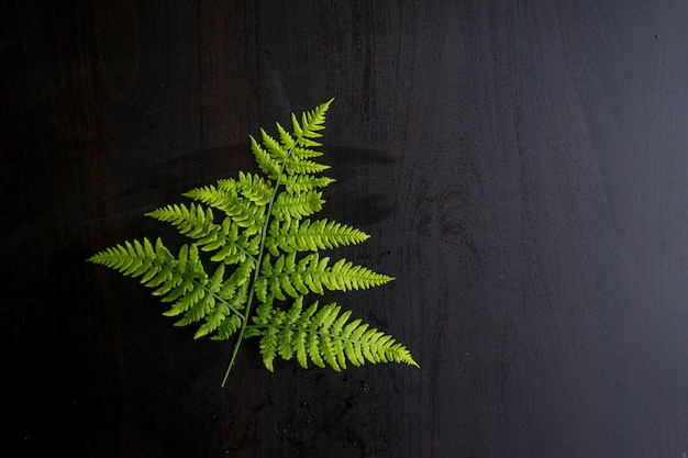 Green fern leaves on grey background with copy space. high quality photo
