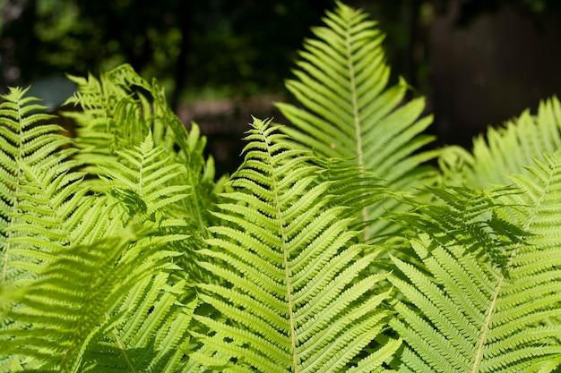 어두운 배경에 태양에 의해 조명 녹색 고비 잎