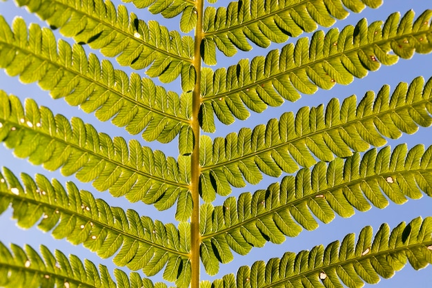 日光の下で緑のシダの葉