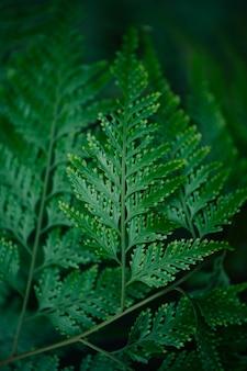 自然の中で緑のシダの葉