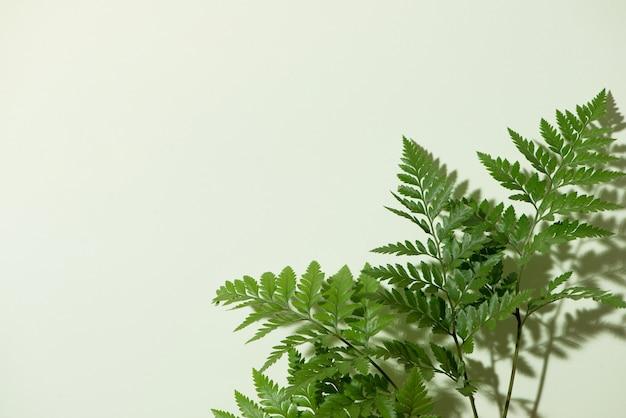 Зеленые листья папоротника, изолированные на белом фоне