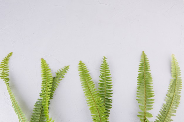 Green fern leaves on light table