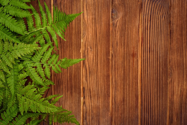 コピースペースを持つ茶色のオークウッドの背景に緑のシダの葉