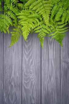 コピースペースを持つ灰色のオークウッドの背景に緑のシダの葉
