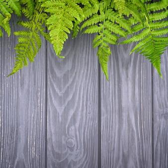 コピースペースを持つ灰色の木製の背景に緑のシダの葉