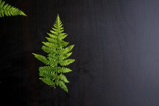 녹색 고사리는 복사 공간이 있는 회색 배경에 나뭇잎. 고품질 사진