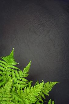 コピースペースと灰色の背景に緑のシダの葉