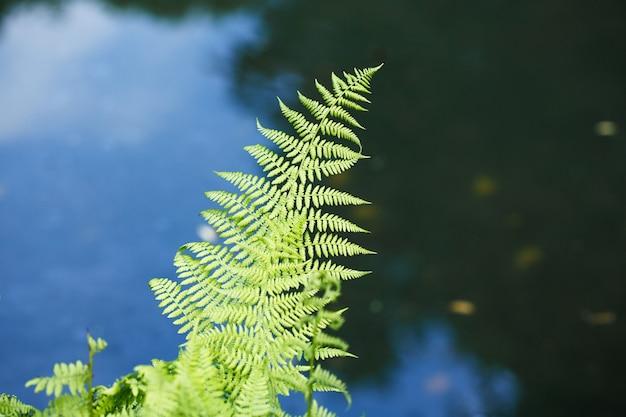 푸른 호수 물의 배경에 녹색 고비 잎