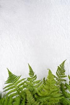 コピースペースで白い背景に緑のシダの葉