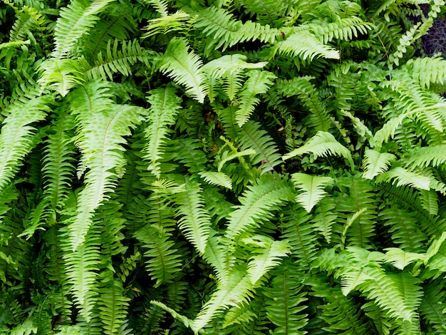 Green fern leaves on vertical garden background