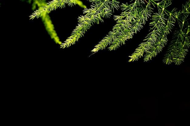 Зеленые листья папоротника с фоном темноты