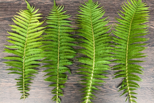 Green fern leaves on a wooden dark surface