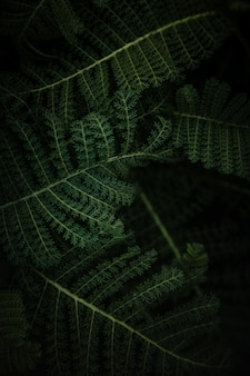 Green fern plant in close up