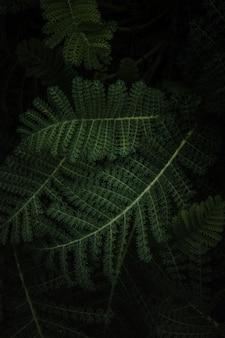 緑のシダ植物をクローズアップ