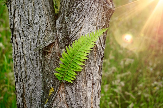Green fern plant leaf textured in summer in the nature