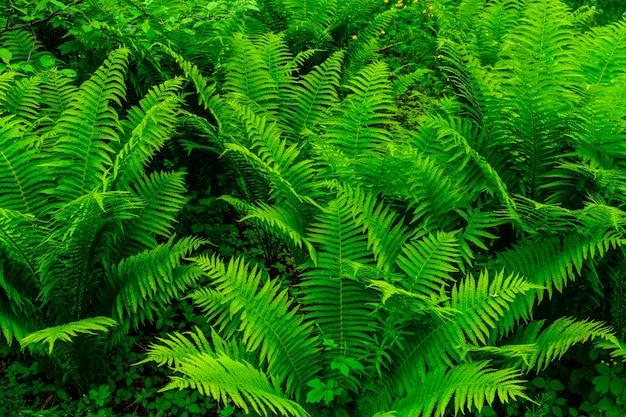 봄에 숲에서 녹색 고사리 식물