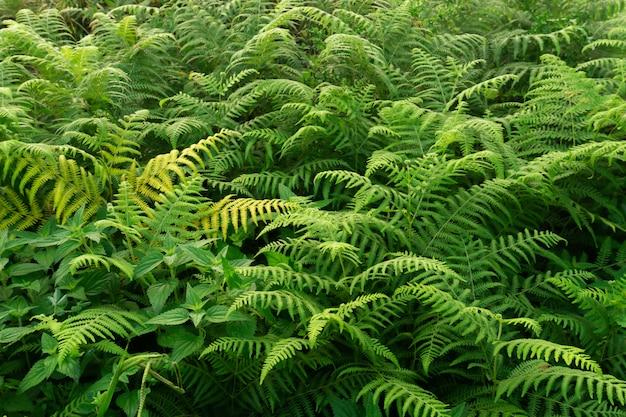 森の真ん中にある緑のシダ植物
