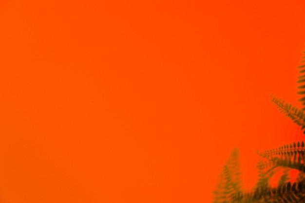 オレンジ色の背景に緑のシダの影