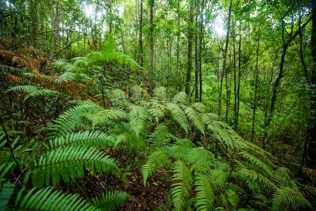 Зеленый папоротник природа в тропическом лесу / пейзаж темный тропический лес пышный