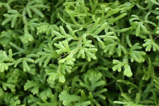 Green fern in tropical