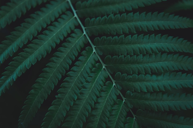 Green ferns leaves background.