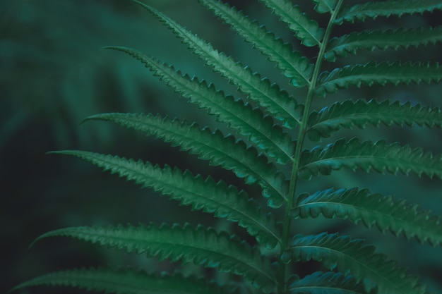 Green ferns leaves pattern background. ferns leaves nature dark green tone background.