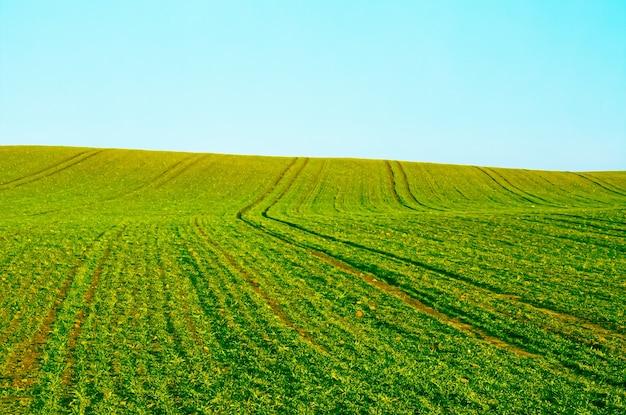 녹색 필드와 푸른 하늘 자연과 환경 배경으로 아름다운 초원