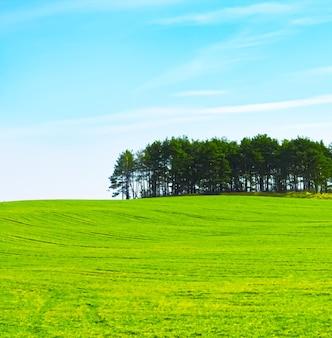 자연과 환경으로서 아름다운 초원과 구름이 있는 푸른 들판과 푸른 하늘